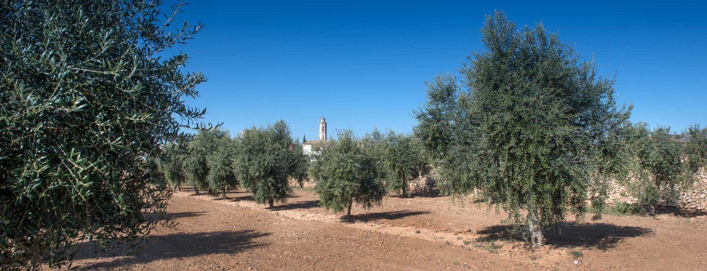 Camp d'oliveres