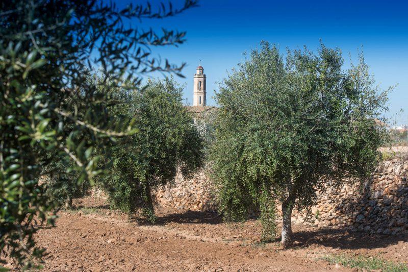 oliveres-i-campanar