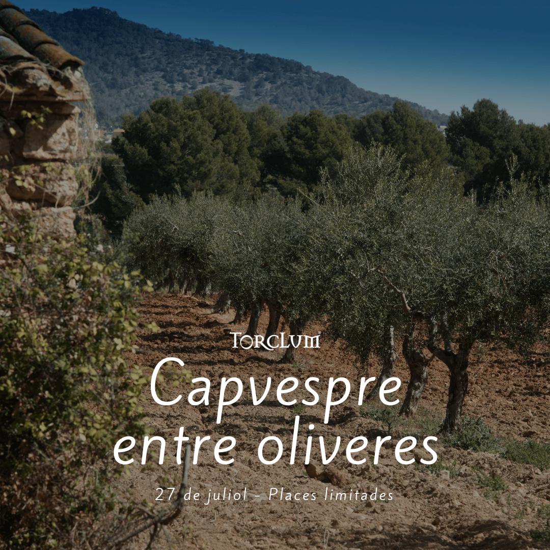 Capvespre entre oliveres