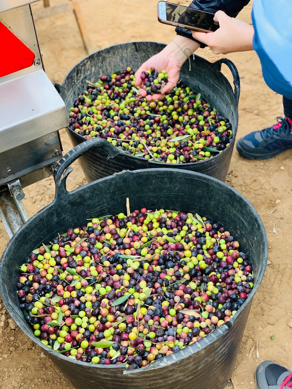 olives-preprarades