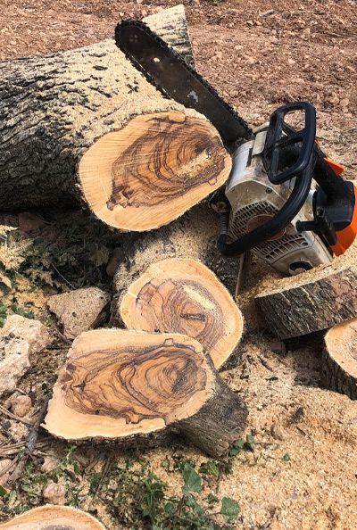 tallant-troncs
